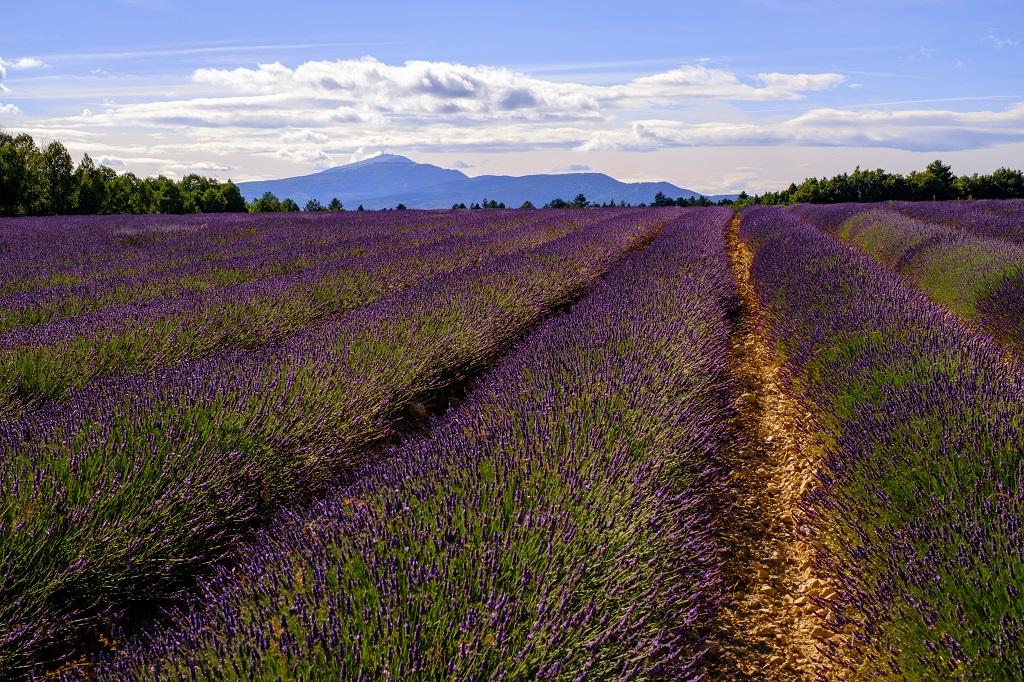 tourisme en Provence - Mont Ventoux